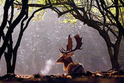 C-c-c-cold Breath - Fallow Deer Buck Art Print by Roeselien Raimond