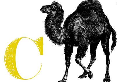 Animal Alphabet Digital Art - C Camel by Thomas Paul