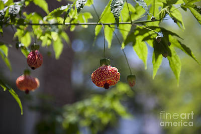 Photograph - Red Papery Covering Over Its Fruit by Dale Powell