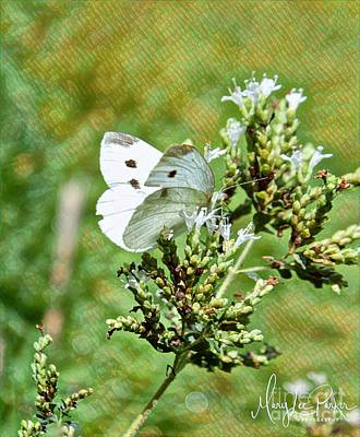 Photograph -  Cabbage Butterfly by MaryLee Parker