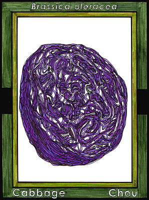 Cabbage Drawing - Cabbage Chou by Baya Clare