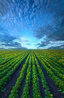 Cabbage Photograph - Cabbage Forever by Phil Koch