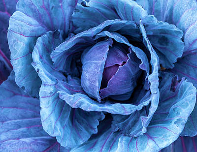 Photograph - Cabbage by Jonathan Nguyen