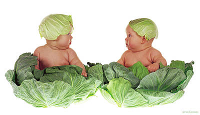 Nursery Photograph - Cabbage Kids by Anne Geddes