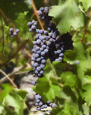 Photograph - Cabernet by Kurt Van Wagner