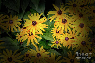 Photograph - Cabin Flowers by William Norton