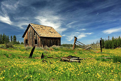Photograph - Cabin In A Field Of Flowers by James Eddy
