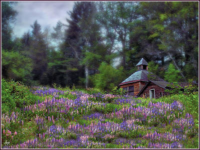Photograph - Cabin In The Lupine Large Format Edition by Wayne King