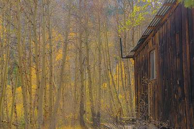 Photograph - Cabin In The Woods by Patricia Dennis