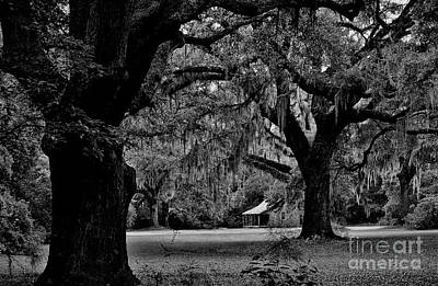 Photograph - Cabin In The Woods by Paulette Thomas