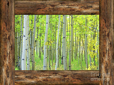 Photograph - Cabin Window View Into The Woods by James BO Insogna