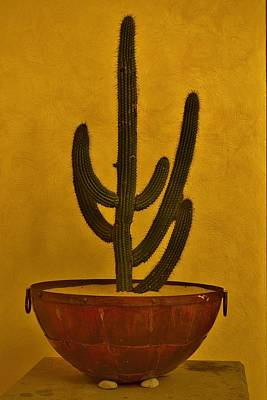 Photograph - Cabo Cactus by Joy Bradley