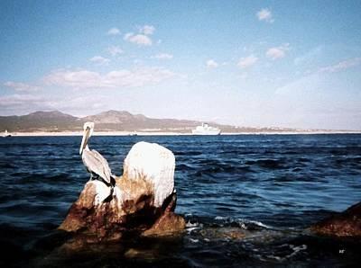Photograph - Cabo San Lucas Pelican by Will Borden