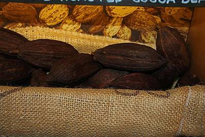 Photograph - Cacao Pods by Michiale Schneider