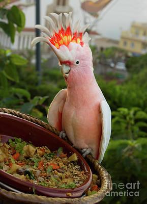 Pretty Cockatoo Photograph - Cacatau Parrot by Anastasy Yarmolovich