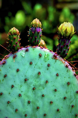 Wall Art - Photograph - Cacti And Friends by Jessica Manelis