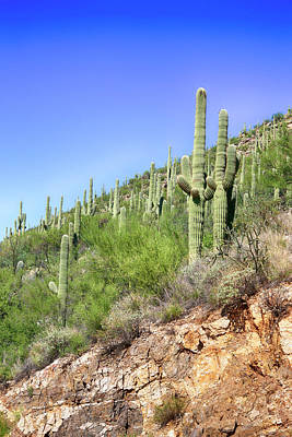 Photograph - Cacti Aplenty by Chris Smith