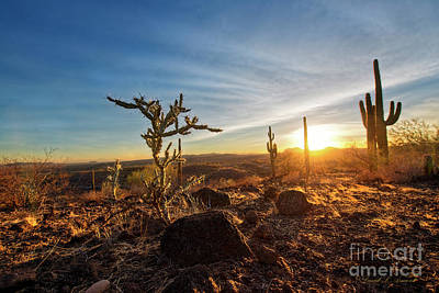 Photograph - Cacti At Sundown by David Arment