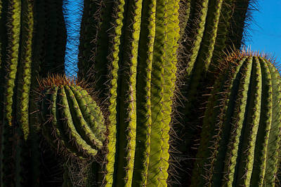 Photograph - Cacti  by Derek Dean