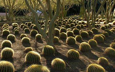 Photograph - Cacti Early Morning by Cheryl Dean