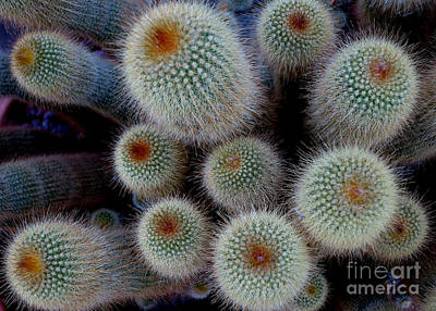 Photograph - Cacti Family by Tanya Searcy