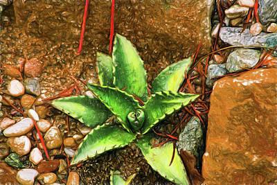 Digital Art - Cacti Moods In Technicolor by Terry Cork