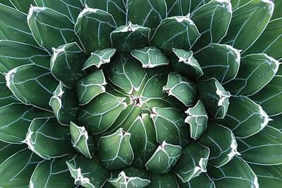 Photograph - Cacti Mundo by Dallas Hyatt