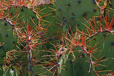 Photograph - Cacti On The Orange Edge by Bruce Gourley