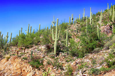 Photograph - Cacti On The Rocks by Chris Smith