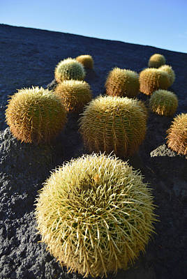 Cacti On The Roof Art Print