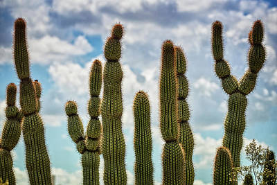 Photograph - Cacti To The Sky  by Saija Lehtonen