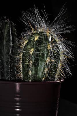 Photograph - Cactus 01 by Edgar Laureano