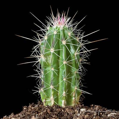 Photograph - Cactus - 0525,s by Wally Hampton