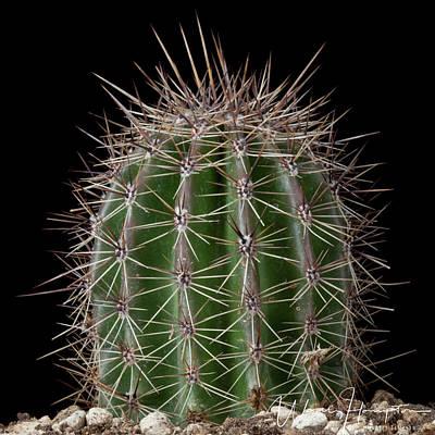 Photograph - Cactus - 0566,s by Wally Hampton
