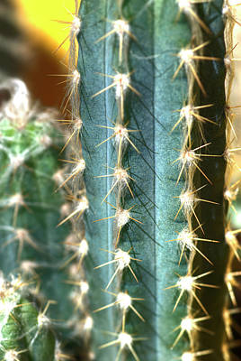 Photograph - Cactus 3 by Jim And Emily Bush