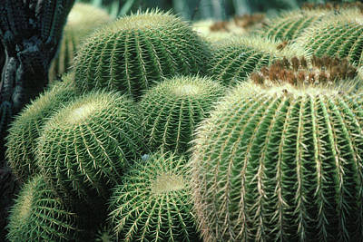 Photograph - Cactus 4 by Andy Shomock