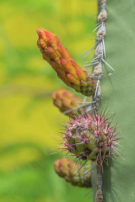 Photograph - Cactus 5936-041118-1 by Tam Ryan