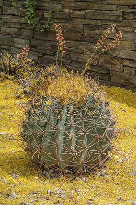 Photograph - Cactus 5940-041118-1 by Tam Ryan