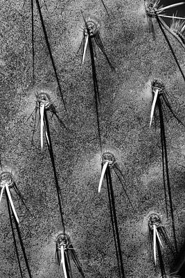 Photograph - Cactus Abstract 11 Bw by Mary Bedy
