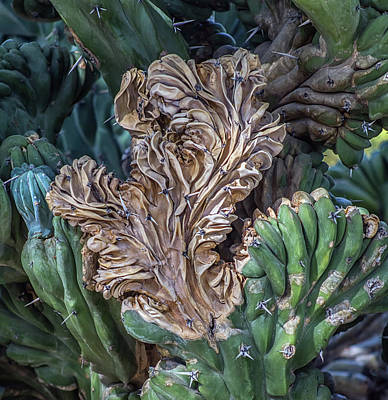 Photograph - Cactus Abstract 5744-041018-1cr by Tam Ryan