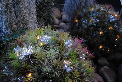 Photograph - Cactus And Lights by Jacqueline M Lewis