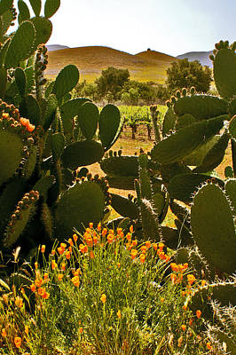 Photograph - Cactus And Poppies by Gary Brandes