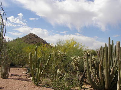 Art Print featuring the photograph Cactus And Sand by Jeanette Oberholtzer