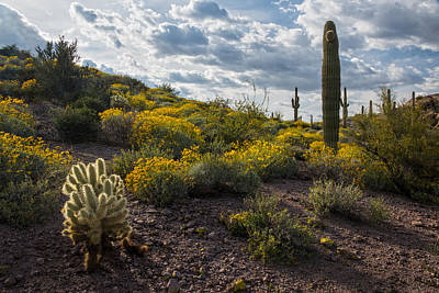 Photograph - Cactus And Springtime Desert Wildflowers. by Dave Dilli