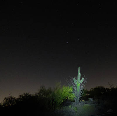 Photograph - Cactus And Stars by Kimo Fernandez