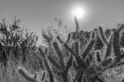 Photograph - Cactus And Sun Valley Of Fire State Park  by John McGraw
