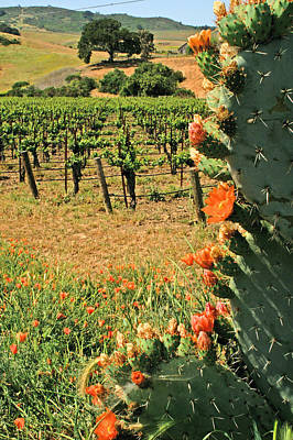 Photograph - Cactus And Vines by Gary Brandes