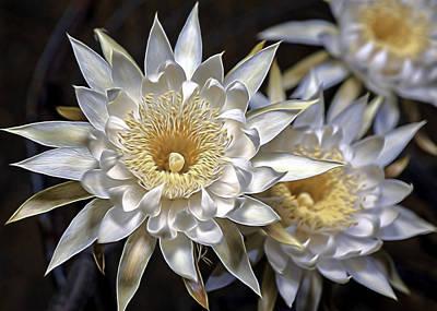 Photograph - Cactus Art by Dan McManus
