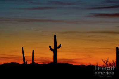 Photograph - Cactus At Dusk by David Arment