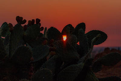 Photograph - Cactus At Sunset by Mark Perelmuter